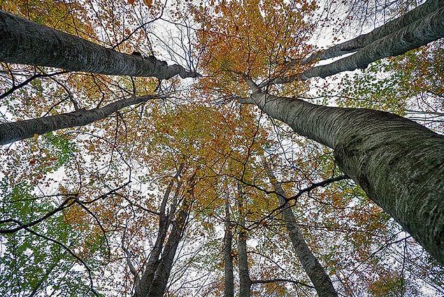 bosque fran vidal