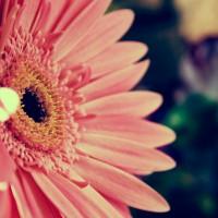 Fondos Flores ADNFriki (4)