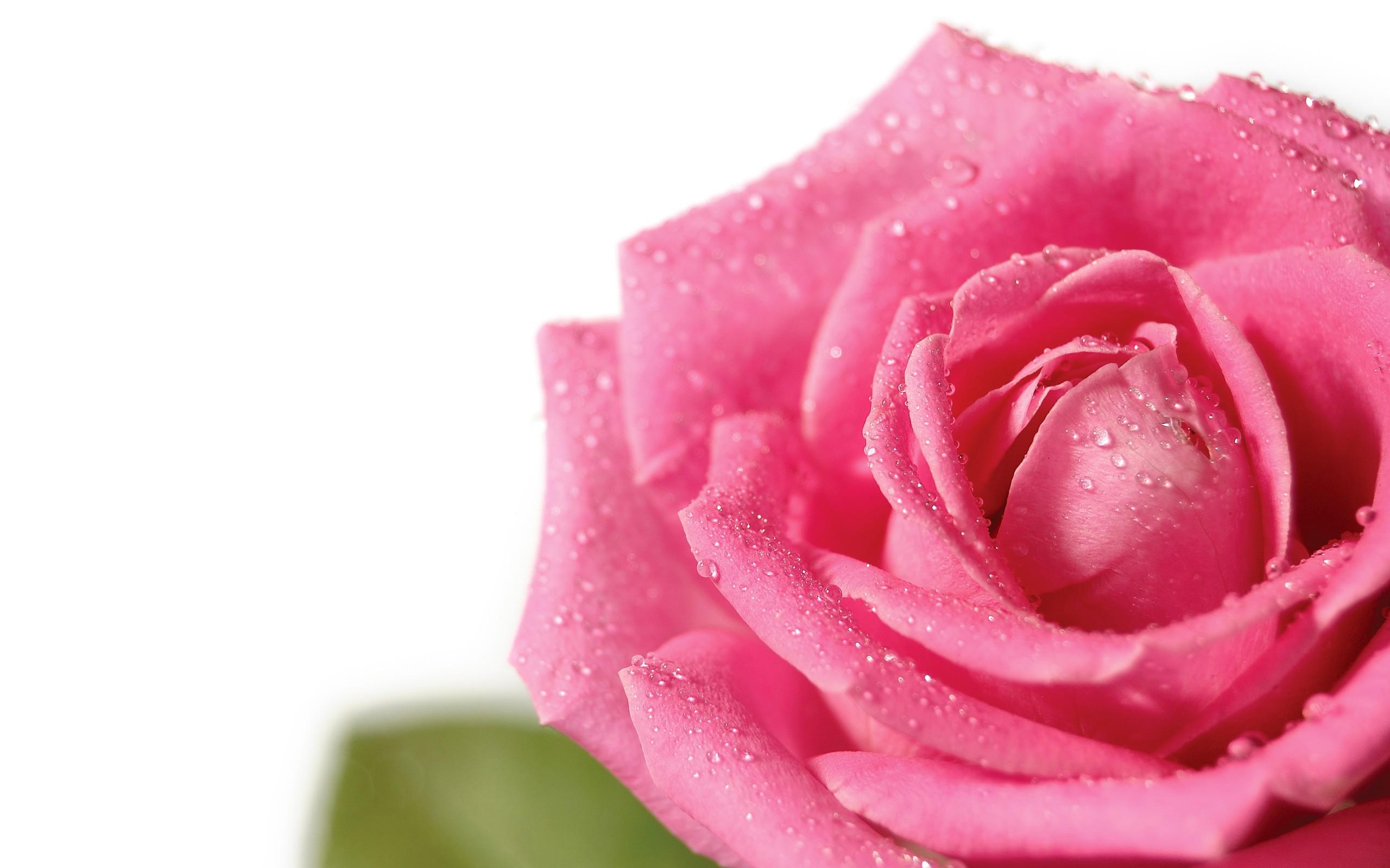 Fondos Flores ADNFriki (8)