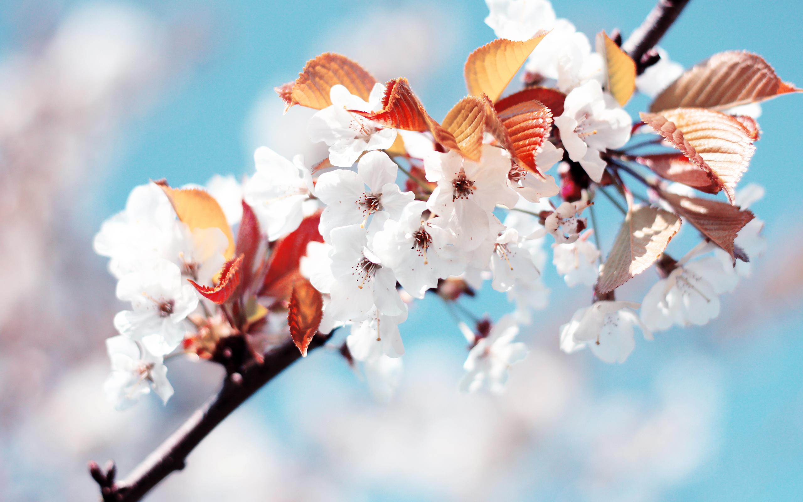 Fondos Flores ADNFriki (5)