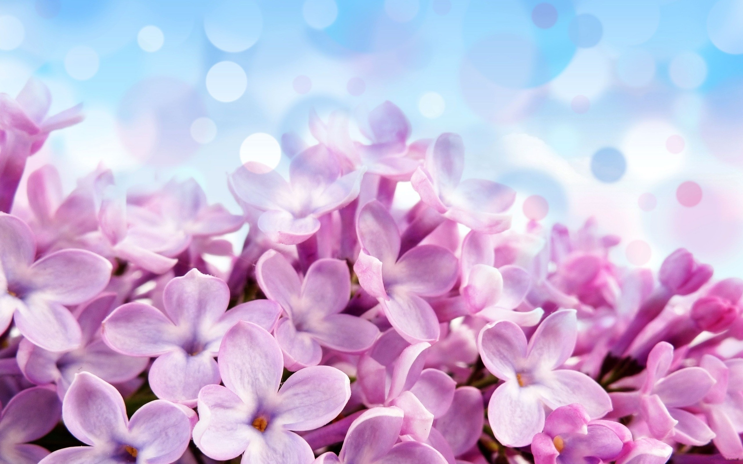 Fondos Flores ADNFriki (6)