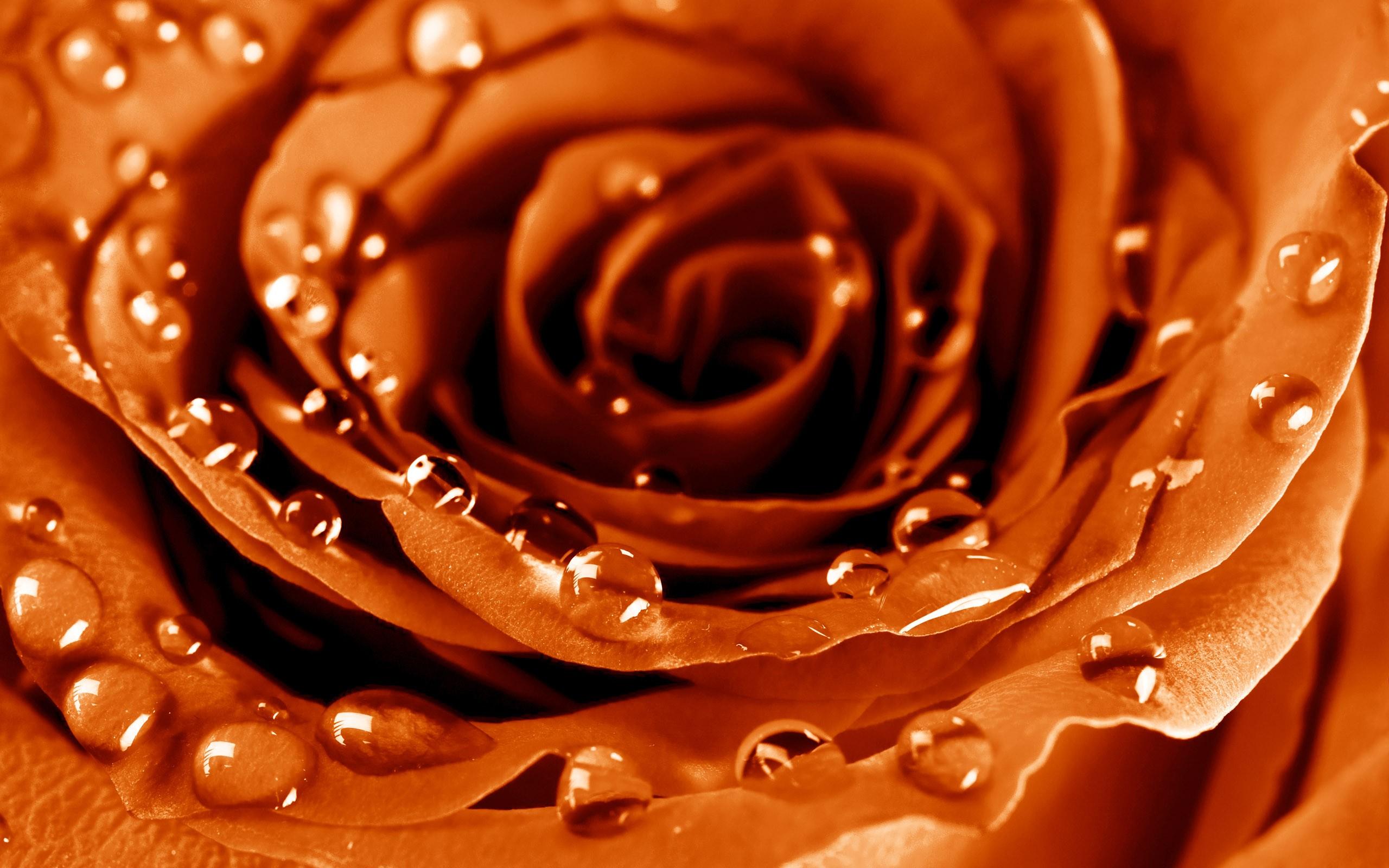Fondos Flores ADNFriki (9)